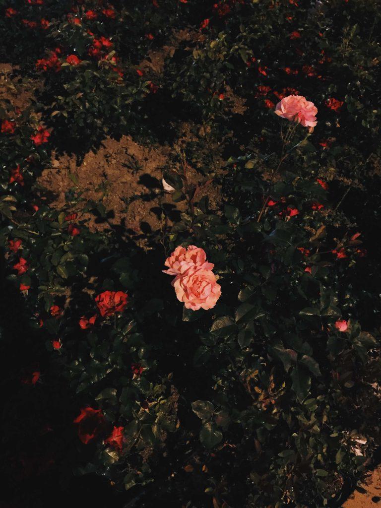 fotoptik.com, mobilfotoğrafçılık